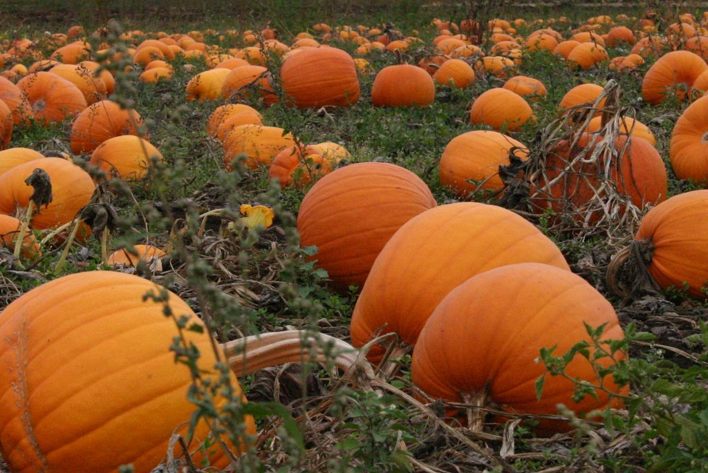What's on in and around Winstanley Pumpkin Picking
